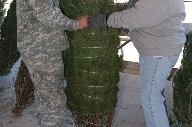 Spc. Robert Cavaco, 18th Military Police Detachment K-9 Unit, picks out the perfect Christmas tree with the assistance of Lois Sagme, Army Community Service employee, at the Trees for Troops Christmas tree giveaway, Dec. 6, in the Thunder Mountain Activity Centre parking lot. Starting at 7 a.m. that morning, more than half of the 138 available trees had been picked up by noon.