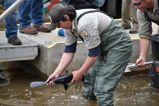 Pete Diaz and Mike Montagne, both with the U.S. Fish and Wildlife Service in San Marcos, Texas, work to release a paddlefish into Caddo Lake, March 5. The demonstration program is designed to show increased diversity to help meet the environment flow criteria and ecological needs of the downstream floodplain and river system between Lake O' the Pines and Caddo Lake.