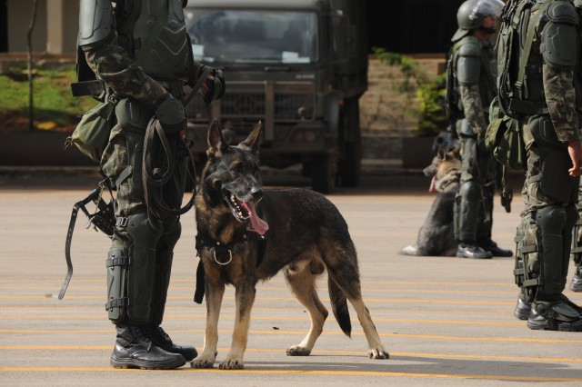 A Brazilian military working dog assigned to the Batalhao de Policia do Exercito de Brasilia (Brasilia Military Police Battalion) stands ready during a riot control demonstration at the battalion's headquarters in Brasilia, Brazil, April 1.