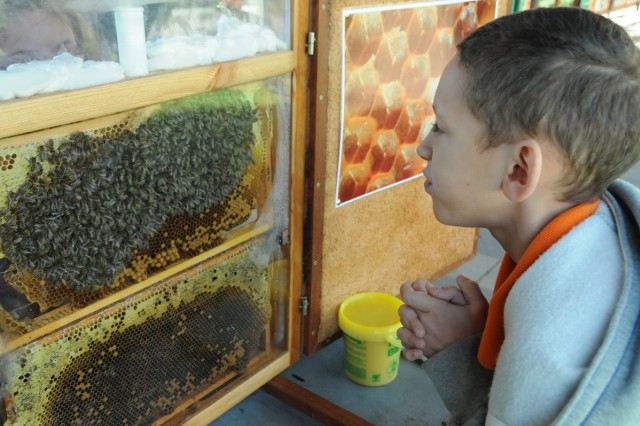 Jalon Tyler-Soto, 9, finds the queen bee, marked by a bright green spot.