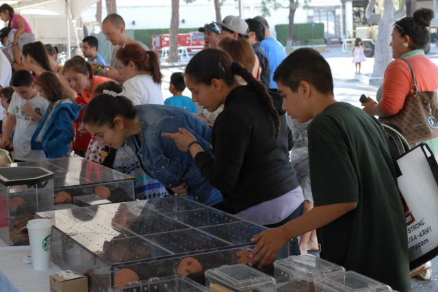 Visitors to Torrance Armed Forces Day get an up close look at some of the spiders on display at the Fort Irwin Department of Public Works booth.