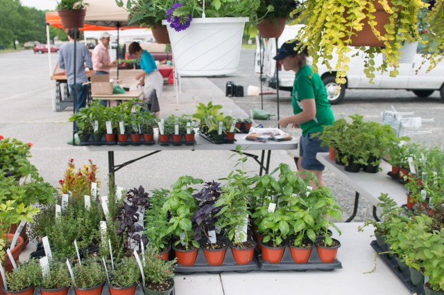 Suzi Gibson, a vendor at the Fort Meade farmers market, set out vegetable, herb and flower plants and provided planting information for customers who wanted to grow their own gardens.