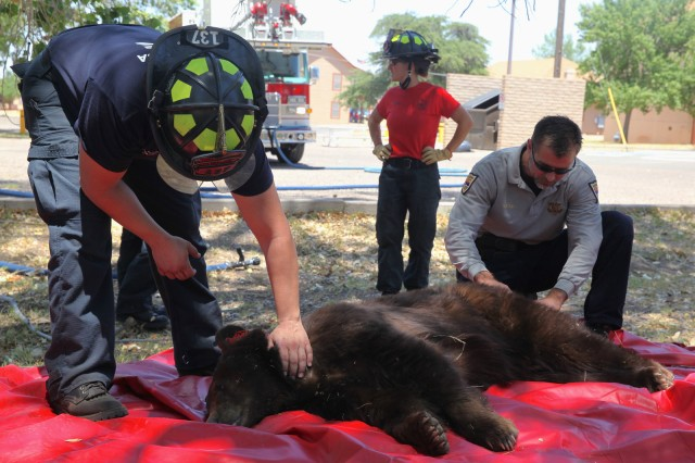 Mama bear two cubs rescued on fort with peaceful ending for Fish and game office near me