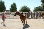 Soldiers learn how to examine a horse
