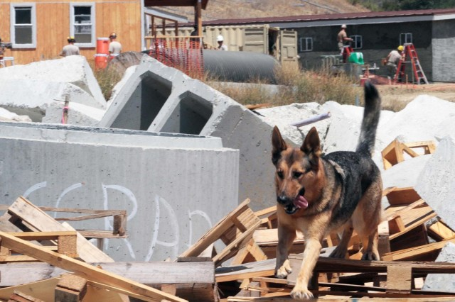 U.S. Army Engineers and Navy Seabees set the backdrop for a disaster search dog training on a rubble pile July 15. The Soldiers and Sailors spent the summer constructing buildings at the National Disaster Search Dog Foundation's National Training Center (NTC) in Santa Paula, Calif. The NTC is the first facility of its kind in the United States for training canine disaster search teams.