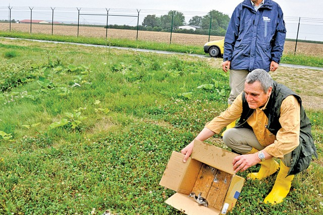 Dr. Thomas Gladis (standing) and Gordon Adam release baby geese into their new home, a lush retention pond behind Newman Village, just outside Wiesbaden's Clay Kaserne.