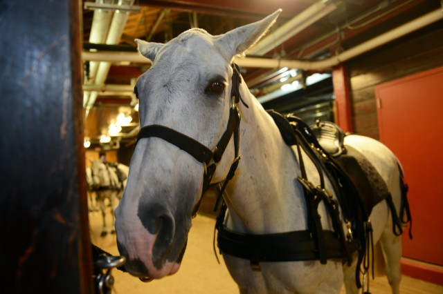 A caisson horse is seen ahead of its funeral mission, Oct. 2, 2014.