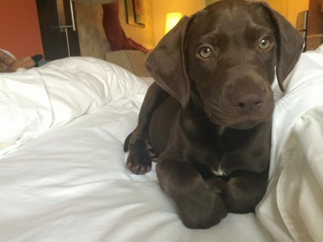 Commentary: My crash course in puppy parenting