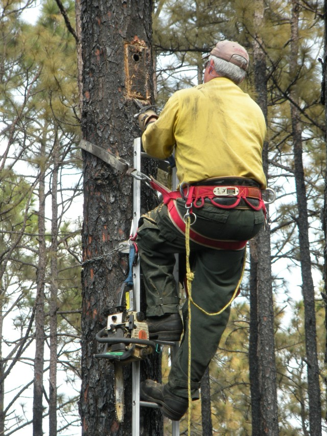 Replacing RCW nesting boxes