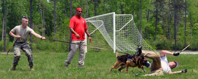 U.S. Army Military Working Dog team in action