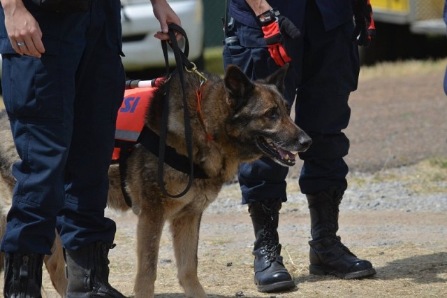 HEMSI search and rescue dogs were brought on post to participate in the full-scale exercise.
