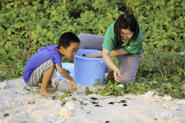 Environmental Specialist Tomoko Ikema plucks sleepy-eyed hatchlings from a blue bin, setting them on a frenzied journey as they scuttled across the sand and out to sea July 17, 2015.