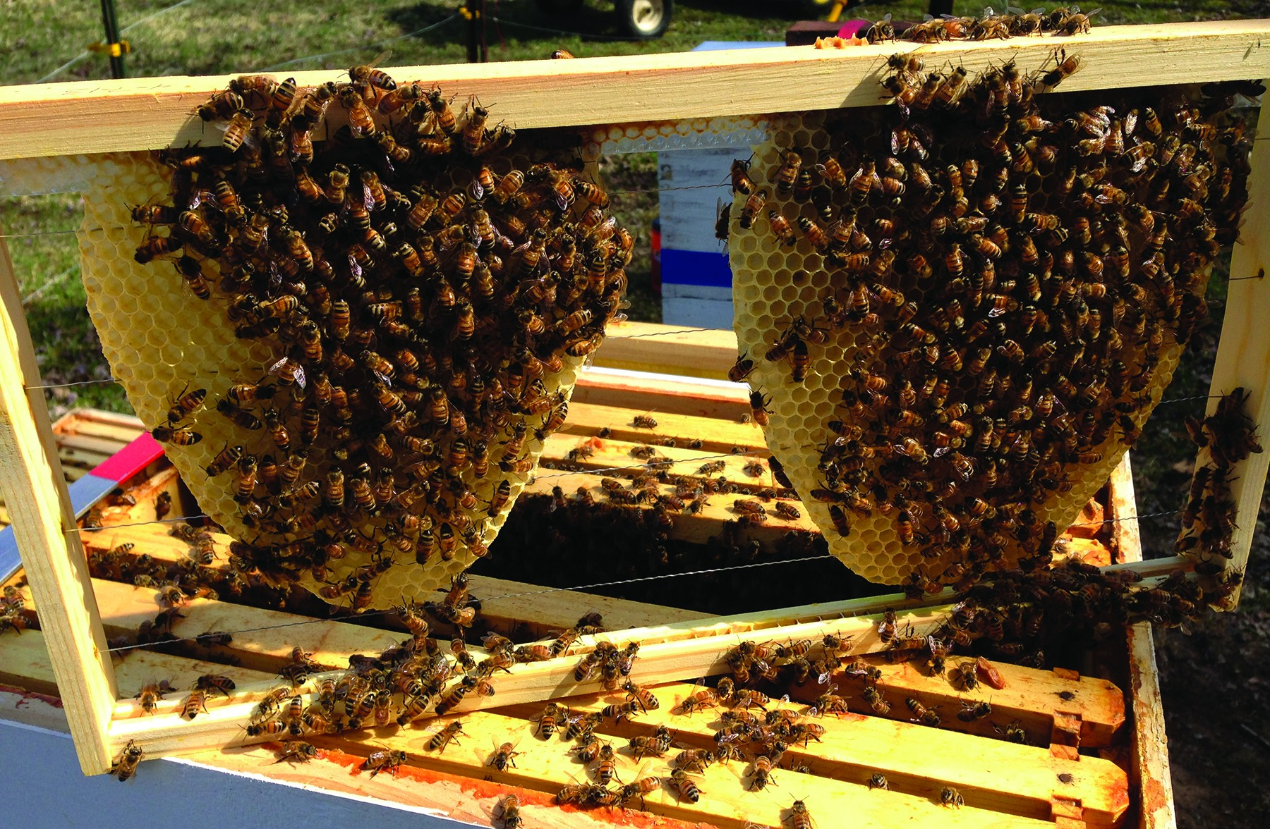 backyard beekeeper talks about life in the hive article the