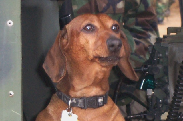 Mingle's 14-year-old Dachshund, Waldi, was promoted to corporal in South Korea and has since beeen promoted to staff sergeant.