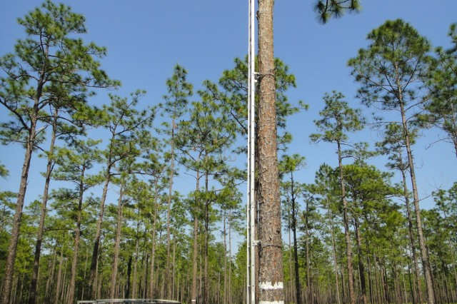 A Camp Blanding employee prepares to catch red-cockaded woodpecker nestlings to band them. Reclamation of the mine site with forest stands directly supports this critical species.