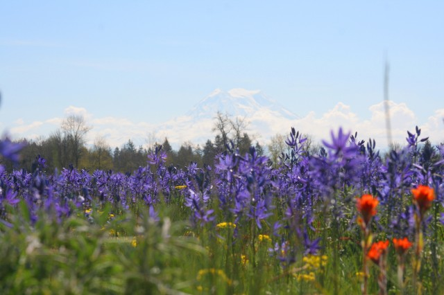 Approximately 90 percent of the remaining South Sound prairies, one of the world's rarest ecosystems, is located on Joint Base Lewis-McChord.