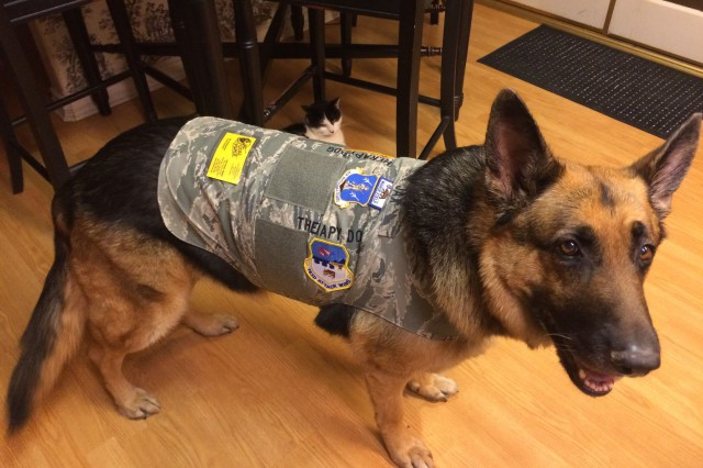 Jax is a German shepherd who is completing training as a certified therapy dog for the 163rd Attack Wing at March Air Reserve Base. Jax tries on his new vest adorned with all the unit patches from March Air Reserve Base.