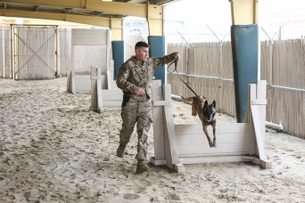 Man's best friend protect the safety of Soldiers