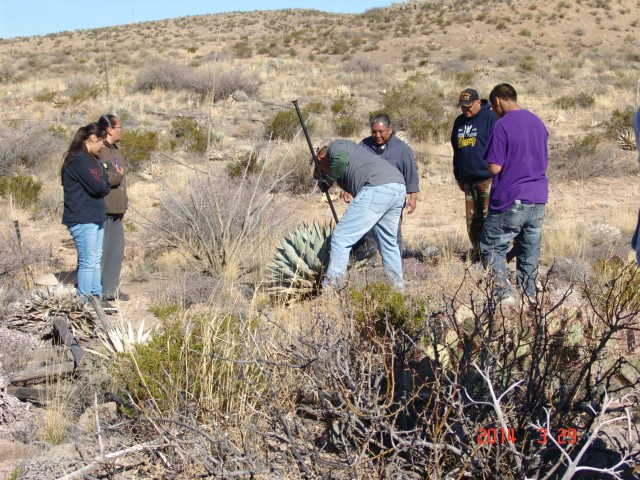 Plants of traditional importance to Mescalero Apache tribe
