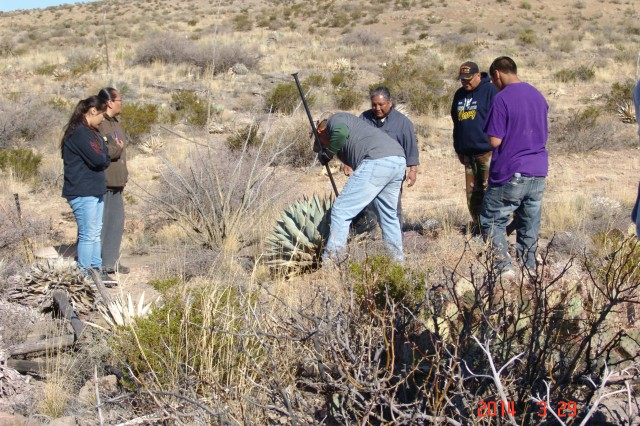 Mescalero Apache tribal members removing agave plant.  The CRM program partnered with the Mescalero to identify and gather plants of traditional importance at WSMR.