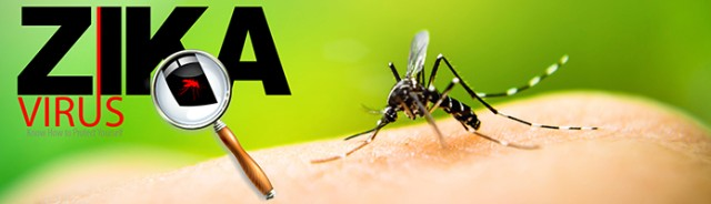 Zika carrying mosquito