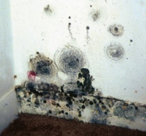 Fort knox combats and fixes mold issues caused by high - What to do about mold ...