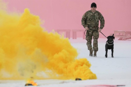 Spc. Jared Schultz and military working dog, Teddy, assigned to the 549th Military Working Dog Detachment, conduct K-9 training, March 17, 2016, at Joint Base Elmendorf-Richardson, Alaska. The Army military working dog handlers conducted the K-9 training with their Air Force counterparts, assigned to the 673d Security Forces Squadron, to keep their teams flexible to respond to law enforcement emergencies and for overseas deployments.