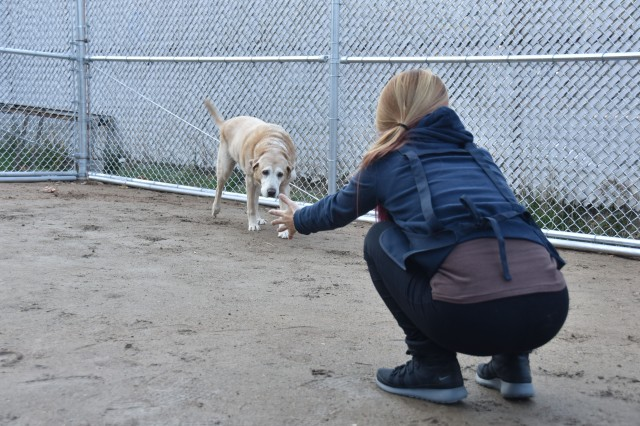 Gina Nam, project manager for the Pet Care Center gets Lexux's attention. (U.S. Army photo by Pvt. Lee Kyoung-yoon)