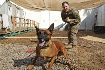 Army dog, handler bond in Baghdad