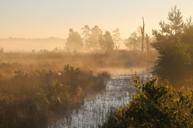 Grafenwoehr Training Area covers diverse wetland and forest habitats and is home to more than 3,000 plant and animal species.