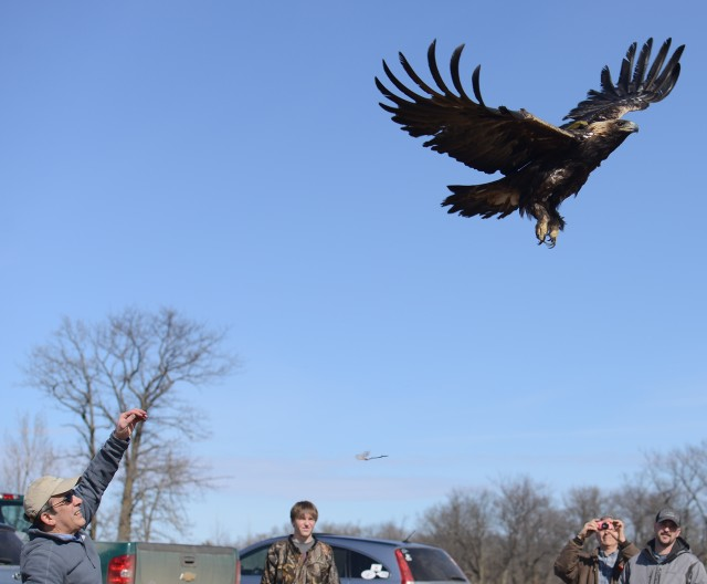 Golden Eagle Project