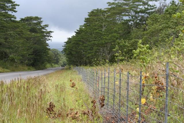 Invasive species take over roadside