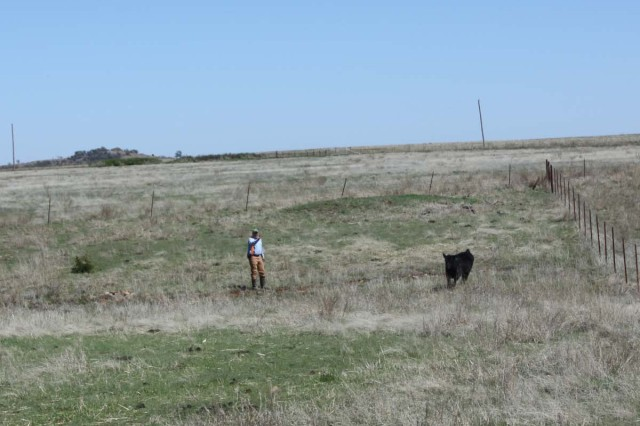 Maj. Joel Heinzeroth chases an escaped calf on his 440-acre cattle ranch April 3, 2017, near Mountain Park, Okla. When he retires in August, Heinzeroth plans to be a full-time rancher.