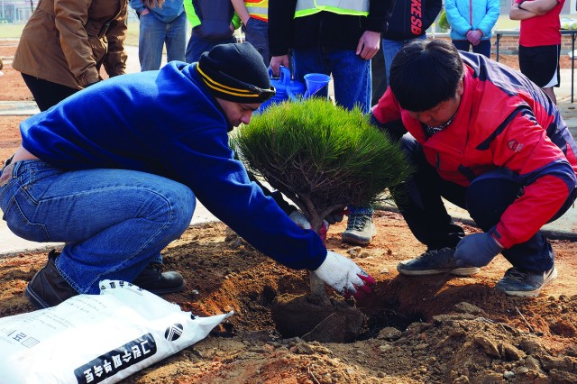 Maj. Raymond M. Santiago (left) and local tree farmer Lee, Seong Gu (right) added plant food to a newly-planted tree before they filled the hole they watered the tree.