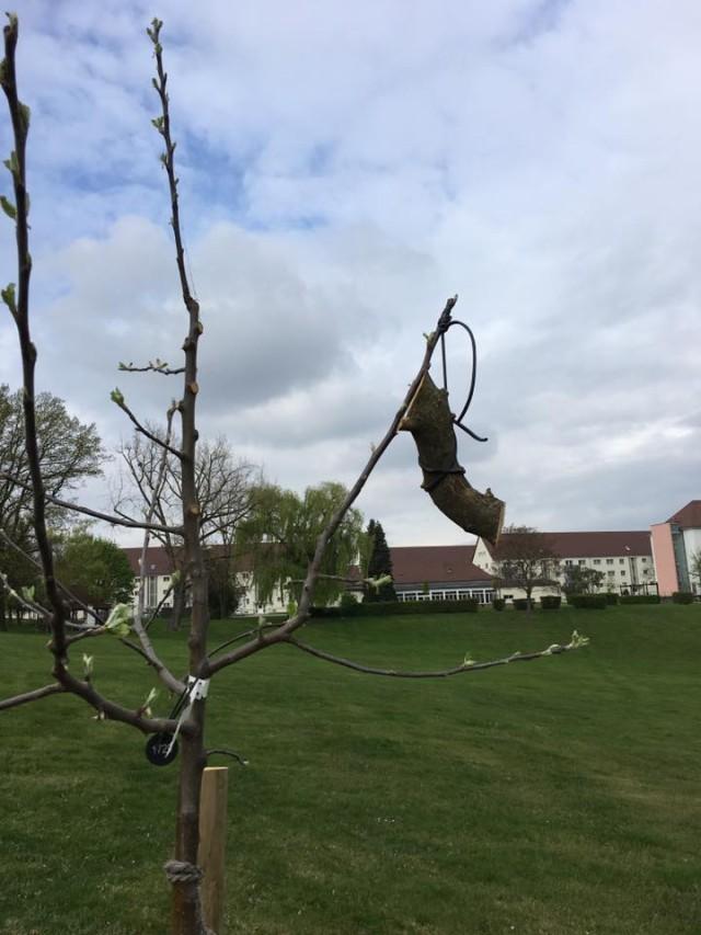 Shape main tree limbs