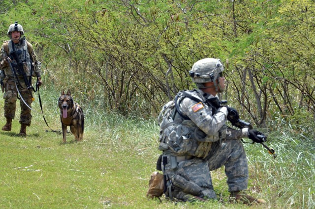 WAIALUA, Hawaii- Military Working Dog Handler, Pvt. Sarah Grills and her K-9 partner Baron, a patrol explosives detector dog with the 520th MWD Detachment, 728th Military Police Battalion, 8th MP Brigade, 8th Theater Sustainment Command, conduct a route clearing mission during 58th MP Company's, 728th MP Bn., validation exercise (VALEX) May 22-26, at Makua Military Reservation, here. The VALEX was conducted as part of the company's training for their upcoming deployment to Guam.