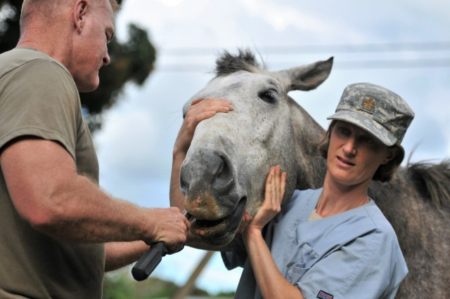 Lt. Col. Howard Gobble (left), the director of veterinary services for Public Health Command, Pacific, and Maj. Kimberly Yore (right), an Army vet from Joint Base Lewis-McChord in Washington state, conduct dental care to a stallion stallion belonging to the Tongan Royal Guard, horse detachment, in the Kingdom of Tonga, July 19, 2017.