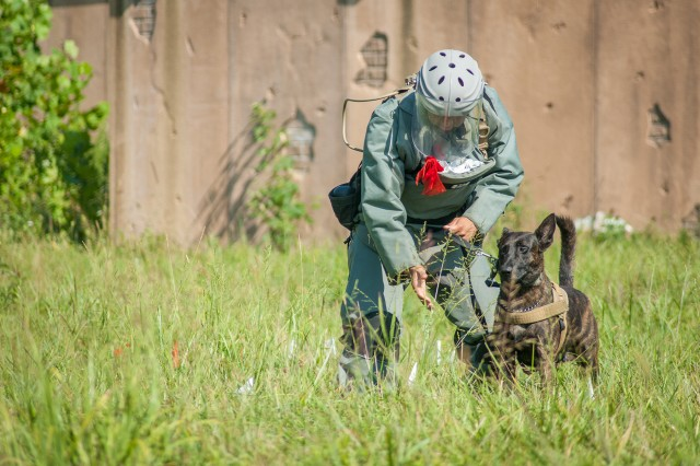 A Soldier in the Combat Engineer Mine Detection Dog Handlers Course directs his dog during an area-clearance and casualty-extraction exercise in the final week of testing Aug. 7. Upon graduation from the course, the dog teams are assigned to the 94th Engineer Detachment, 5th Engineer Battalion, at Fort Leonard Wood, the only combat engineer unit with mine-detection dogs in the Army and Department of Defense.