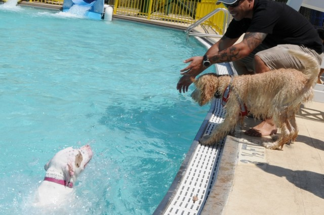 Then-W01 Arnold Caceres, B Co., 1st Bn., 145th Avn. Regt., beckons his dog, Harley, over to the side of the pool at Splash! Pool and Spray Park during a previous Dog Days of Summer.
