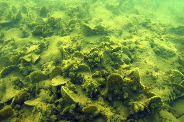 Underwater substrate