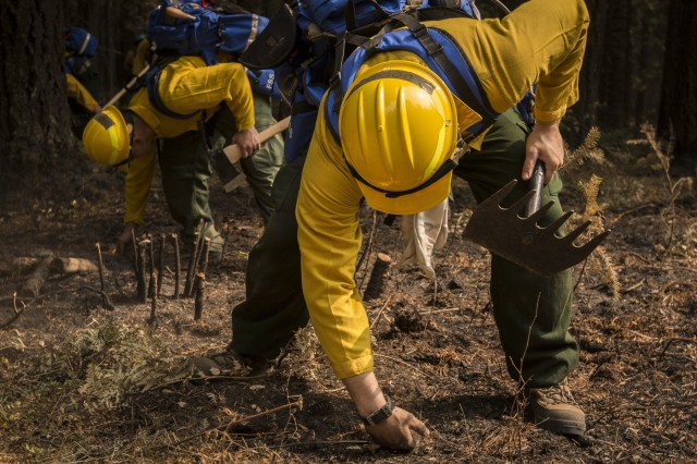 U.S. Army Soldiers, assigned to 23rd Brigade Engineer Battalion, 1-2 Stryker Brigade Combat Team, complete initial tactical training with civilian firefighters working with the U.S. Forest Service in the Umpqua National Forest, Umpqua North Complex, Oregon, Sept. 8. The Soldiers were taught to check for hot spots under the scorched forest floor, by feeling for heat with the backs of their hands. This techniques is known at cold trailing. (U.S. Army photos by Pvt. Adeline Witherspoon, 20th Public Affairs Detachment)