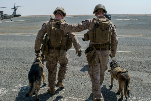 Task Force Wraith Soldiers escort military working dogs and their U.S. Marine handlers toward an HH-60M aeromedical evacuation helicopter during joint training on September 2 at Camp Buehring, Kuwait.