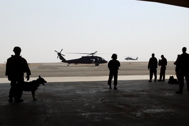 Task Force Wraith Soldiers and military working dogs with their U.S. Marine handlers from the Directorate of Emergency Services observe an HH-60M aeromedical evacuation helicopter during joint training on September 2 at Camp Buehring, Kuwait.
