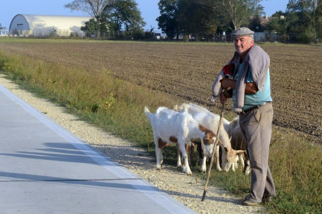 A shepherd tends his goats and three cows nearby (not shown) just outside Camp Mihail Kogalniceanu, Romania.