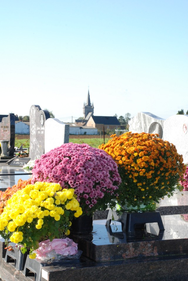 Chrysanthemums at a cemetery