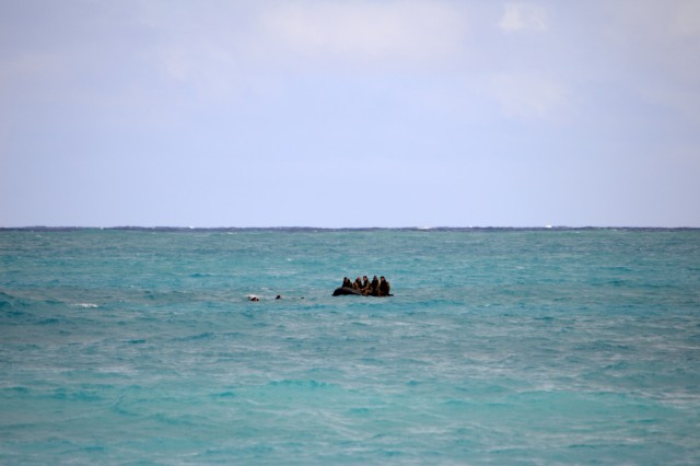 Scout swimmers to the 3rd Squadron, 4th Cavalry Regiment, 3rd Brigade Combat Team, 25th Infantry Division, disembark from an F470 Zodiac [combat rubber raiding craft] off the coast of Marine Corps Training Area Bellows, Hawaii, on Nov. 29, 2017. The Soldiers participated in waterborne training with his unit in the Pacific Ocean. (U.S. Army photo by Staff Sgt. Armando R. Limon, 3rd Brigade Combat Team, 25th Infantry Division)