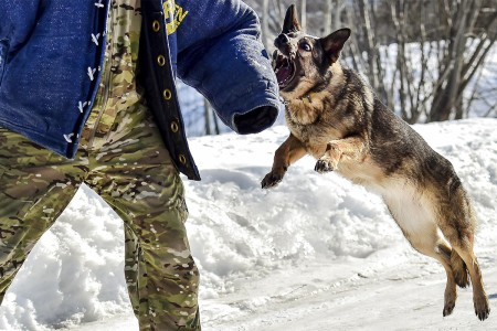 A German shepherd assigned to 549th Military Working Dog Detachment, conducts aggression training with a handler at Joint Base Elmendorf-Richardson, Alaska, March 21, 2017.