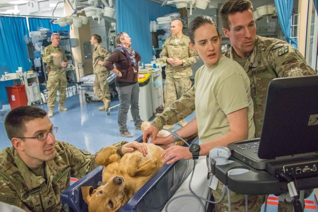 U.S. Army veterinarian Capt. Michael White, right, demonstrates veterinary ultrasound techniques for Military Working Dogs to Soldiers in Afghanistan.