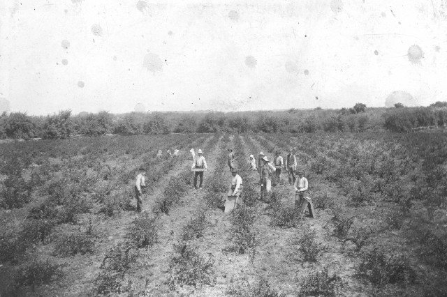 Before there was Godman Army Airfield, there was a gooseberry field owned by W.P. Ray.