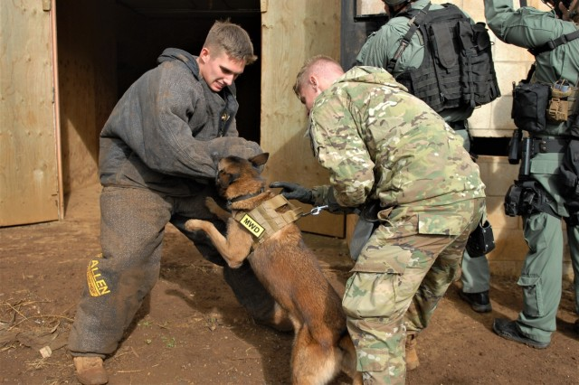 The 520th Military Working Dog Detachment and Honolulu Police Department's K-9 Unit conducted joint training February 8, 2018 at Schofield Barracks, Hawaii. The training emphasized best practices when using a MWD within a stack formation while entering and clearing a building. The K-9's and their handlers were also tested on their abilities to find explosives and drug paraphernalia. (Photo by Sgt. 1st Class Wynn A. Hoke)